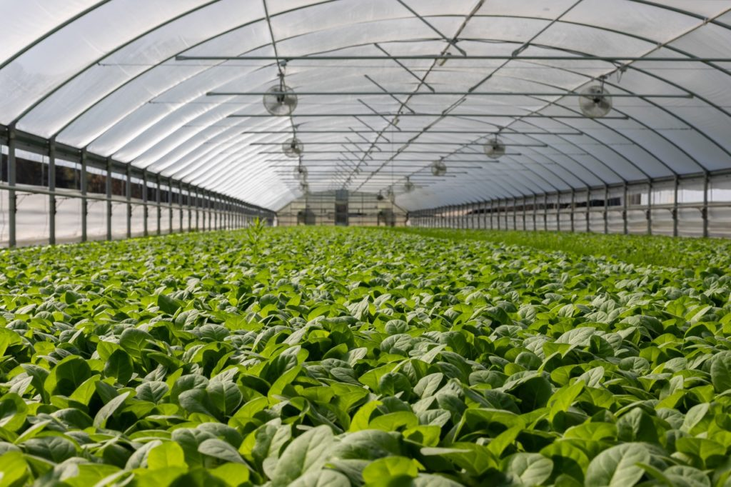 inside of a large greenhouse