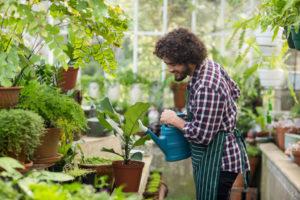 man watering plants